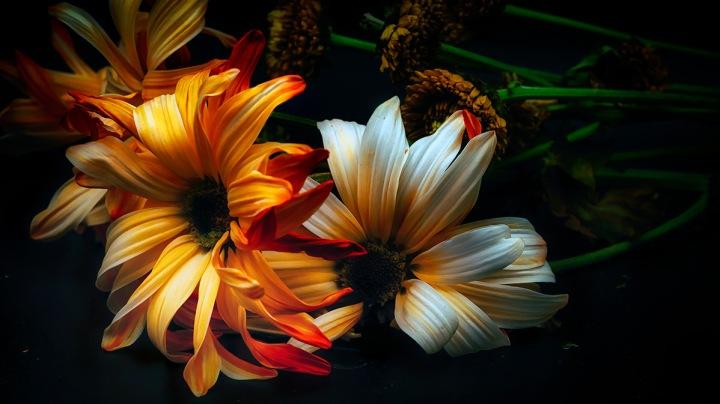 macro daisies